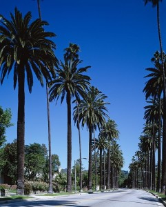 palm-trees-743842_960_720