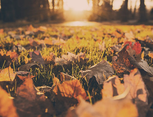 fall_leaves-ground_rk